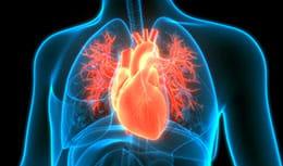 blue x-ray of heart illuminating bright orange
