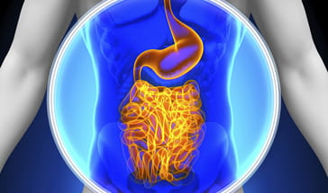 grey vector of blue and yellow gastrointenstinal tract