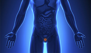 The Prostate: BPH and Beyond