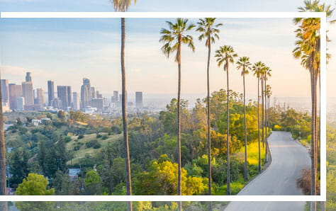 Los Angeles skyline with palm trees, home of Pri-Med's CME conference in Los Angeles, CA